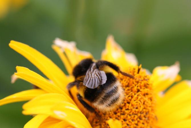 Fruntasi la productia de miere